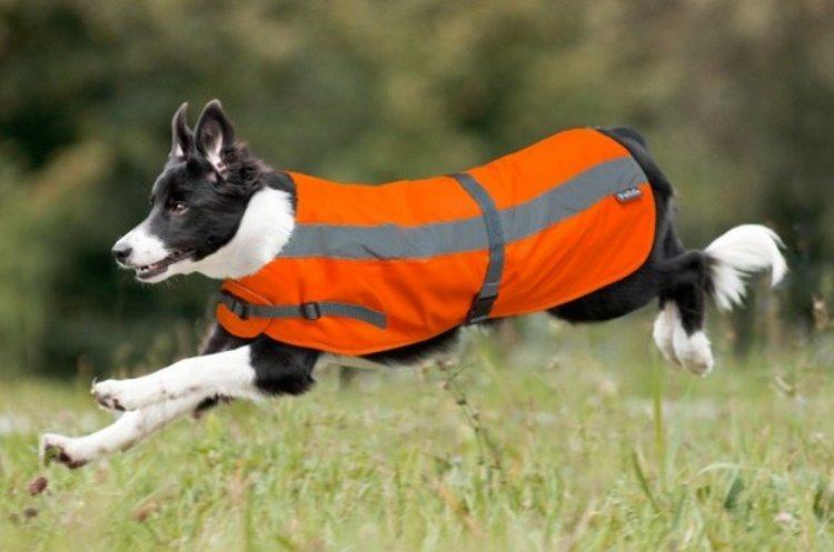 Petlife Flecta High Vis Dog Coat