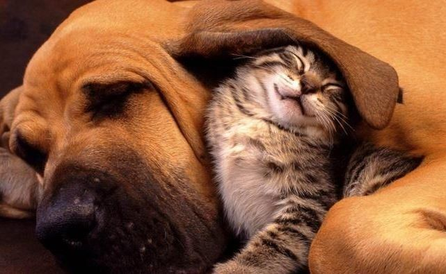 Causes of Arthritis in Dogs and Cats
