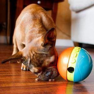 Treat Chaser Dog Game