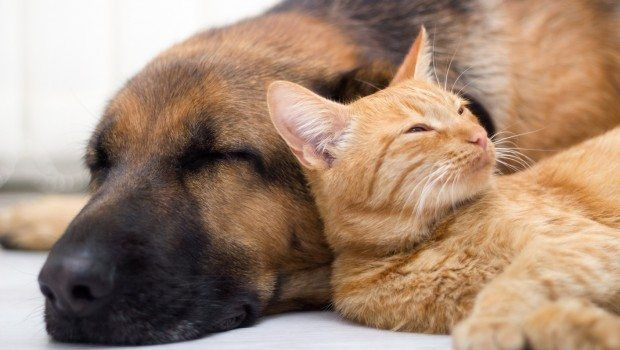Treating arthritis naturally in dogs and cats