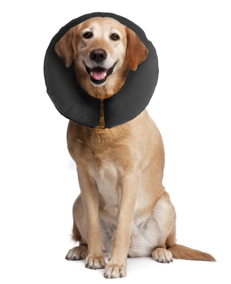 ZenPet ProCollar Premium Recovery Collar