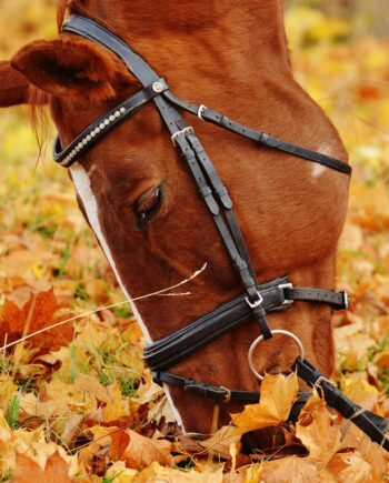Your Healthy Horse